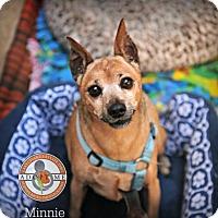Adopt A Pet :: Minnie - Oceanside, CA