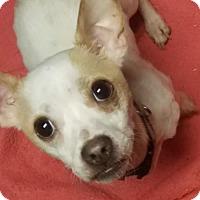 Adopt A Pet :: Roger - Kenosha, WI