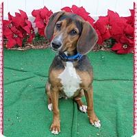 Adopt A Pet :: FANG - Marietta, GA