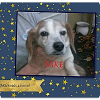 Adopt A Pet :: JAKE - Ventnor City, NJ