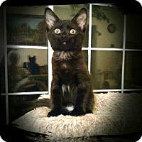 Adopt A Pet :: Inki - Richmond, VA
