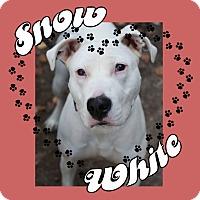 Adopt A Pet :: Snow White - Des Moines, IA