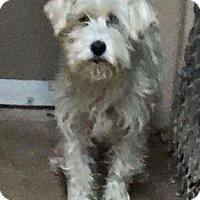 Adopt A Pet :: Sugar - Oakland, FL