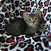 Adopt A Pet :: Terence - Tampa, FL