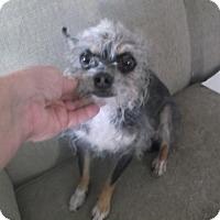 Adopt A Pet :: Walter - Bonifay, FL