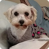 Adopt A Pet :: Blanche - Mary Esther, FL