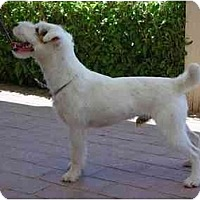 Adopt A Pet :: SILVERADO - Scottsdale, AZ