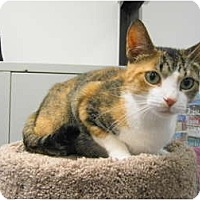 Adopt A Pet :: Taffy - Warminster, PA