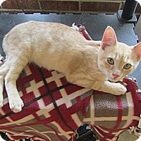 Adopt A Pet :: Joey - Mobile, AL