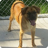 Adopt A Pet :: Trixie - Manning, SC