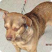 Adopt A Pet :: Mort - Kendall, NY