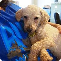 Adopt A Pet :: Bowen - Prole, IA
