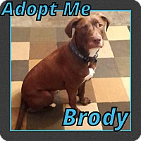 Adopt A Pet :: Brody - Cheney, KS