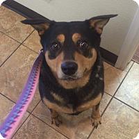 Adopt A Pet :: Roxy-NICE DOG - Oak Ridge, NJ