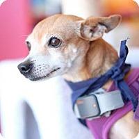 Adopt A Pet :: Penny - Santa Monica, CA