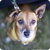 Adopt A Pet :: Edie - Marina del Rey, CA