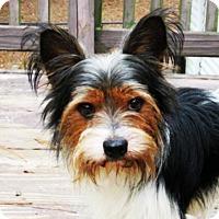 Adopt A Pet :: Kansas - Arlington, VA