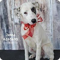 Adopt A Pet :: JENNA - Conroe, TX