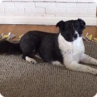 Adopt A Pet :: Delilah - Pueblo West, CO