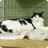 Adopt A Pet :: Juliet - Marlinton, WV