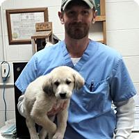 Adopt A Pet :: Matt~ meet me! - Glastonbury, CT