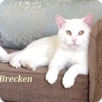 Adopt A Pet :: Brecken - Loves Belly rubs! - Huntsville, ON