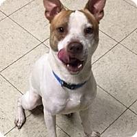 Adopt A Pet :: Braven- Ohio - Fulton, MO
