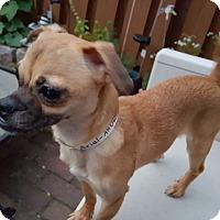 Adopt A Pet :: Ariel - Andalusia, PA