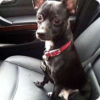 Adopt A Pet :: Paco - Sudbury, MA