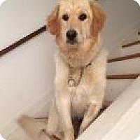 Adopt A Pet :: Tanner - Saskatoon, SK