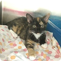 Adopt A Pet :: Angel G2 #1 - Lunenburg, MA