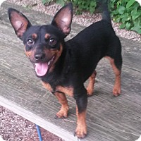 Adopt A Pet :: Vito - Muskegon, MI
