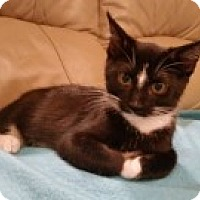 Adopt A Pet :: Milan - McHenry, IL