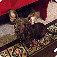Adopt A Pet :: Cooper - WAGONER, OK