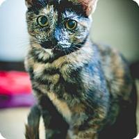 Adopt A Pet :: Ember - Leander, TX