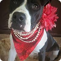 Adopt A Pet :: Keisha - Flint, MI