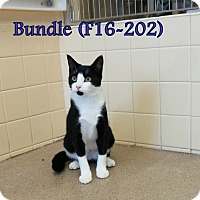 Adopt A Pet :: Bundle - Tiffin, OH