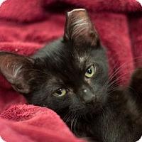 Adopt A Pet :: Zia - Alexandria, VA