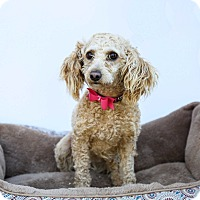 Adopt A Pet :: Penelope - Auburn, CA