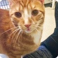 Adopt A Pet :: Mott - Victor, NY