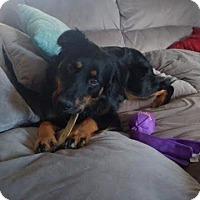 Adopt A Pet :: Max Charles - Tonawanda, NY
