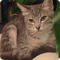 Adopt A Pet :: Oralia - Sherman Oaks, CA