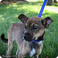 Adopt A Pet :: grassHopper - Broomfield, CO