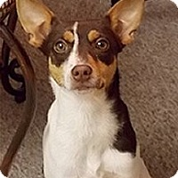 Adopt A Pet :: Tidbit - Jacksonville, FL