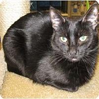 Adopt A Pet :: Teddie - Mesa, AZ