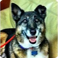 Adopt A Pet :: Hannah - Minnetonka, MN