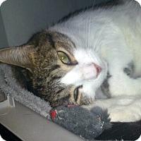 Adopt A Pet :: Tia - Gilbert, AZ