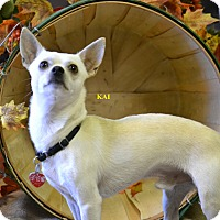 Adopt A Pet :: KAI - Higley, AZ