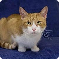 Adopt A Pet :: Cleo - Lancaster, MA