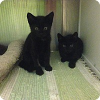 Adopt A Pet :: Simba and Mufasa - Oyster Bay, NY